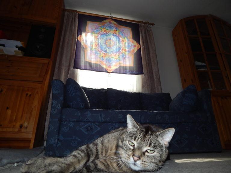Bild von einem hinterleuchtenden Tuch (durch die Sonne) das am Fenster hängt, welches ein komplexes buntes Mandala als Aufdruck hat. Davor ist eine verplanter Kater :D
