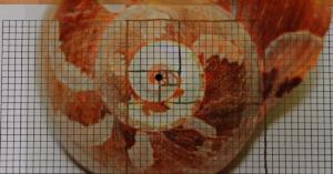Bild von einem Schneckenhaus auf einem Karopapier