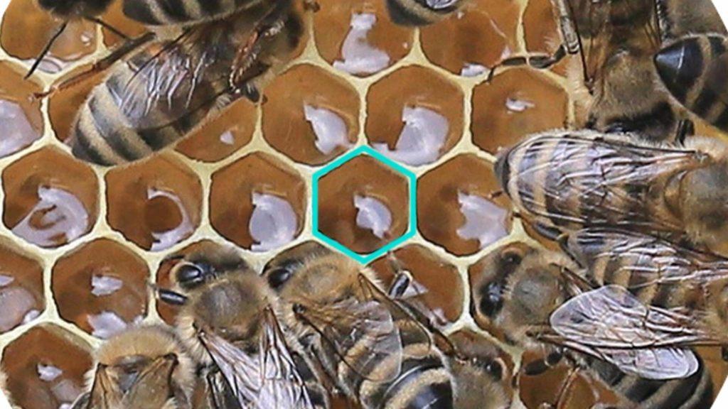 Bild von einer Bienenwabe mit Sechseck